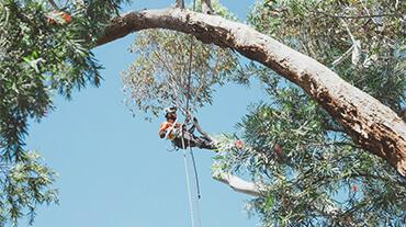 Certified arborist